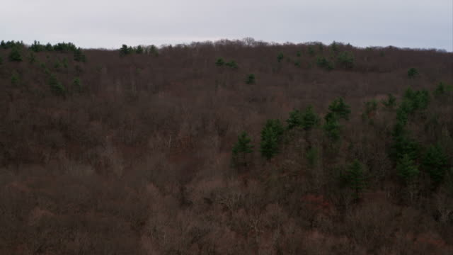 Over leafless forest in Sleeping Mountain State Park, revealing New Haven, Connecticut. Shot in November 2011.