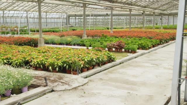 stockvideo's en b-roll-footage met pan over multicoloured flower beds in vast greenhouse, man and woman working on hanging plant rack - mid volwassen mannen