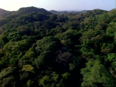 aerial over rainforest canopy, panama. - tree canopy stock videos & royalty-free footage