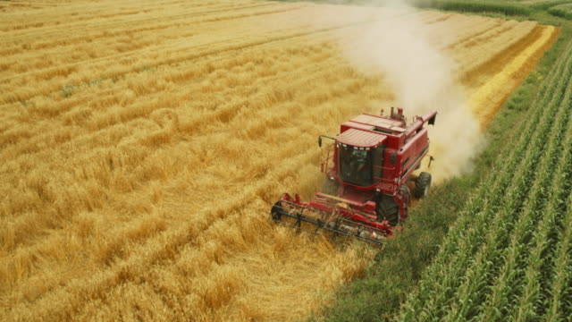 aerial over the combine harvesting wheat - agricultural equipment stock videos & royalty-free footage