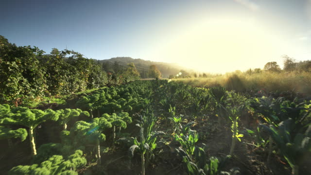 POV over vegetables on Oreganic Farm