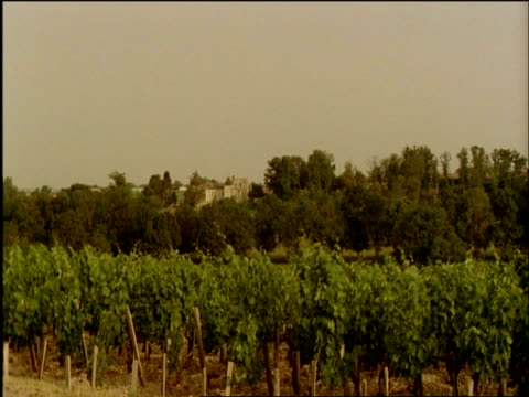 WA over vineyard, Chateau Lafite Rothschild, Bordeaux, France