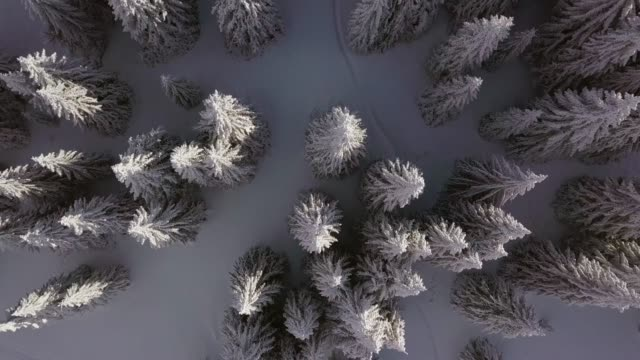 over winter trees - snowflake stock videos & royalty-free footage