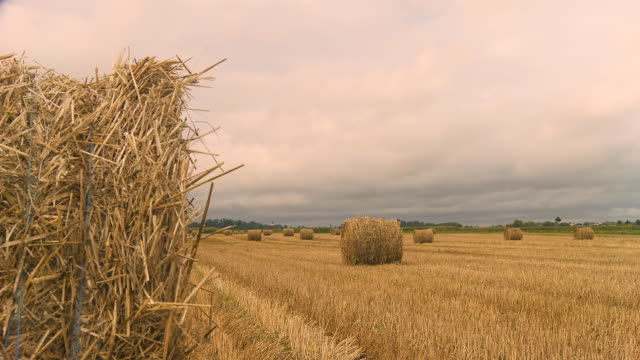 hd dolly: overcast field - hay field stock videos & royalty-free footage