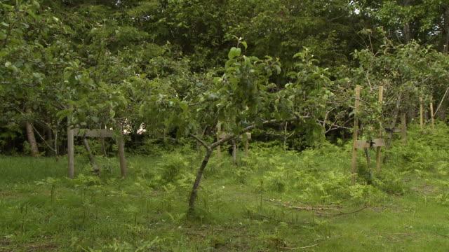 vídeos de stock e filmes b-roll de overgrown tree farm - descuidado