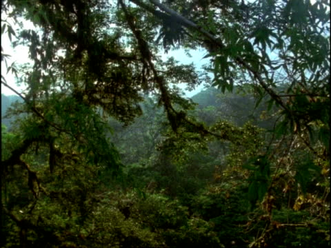 wa overhanging forest canopy, brazil - tree canopy stock videos and b-roll footage