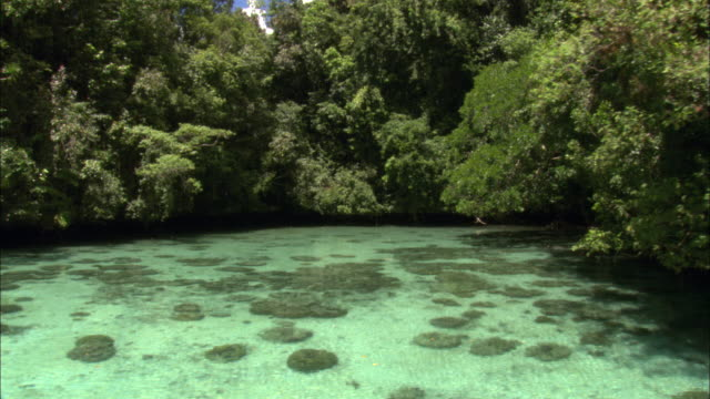 overhanging trees surround blue-green waters of a shallow lagoon. - micronesia stock videos & royalty-free footage