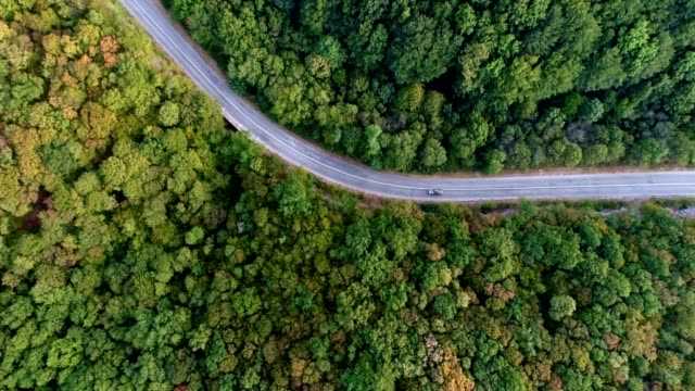 overhead aerial shoot of a car on the road in colorful forest - on top of stock videos & royalty-free footage