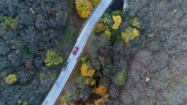 overhead aerial shoot of a red car on the road in colorful forest - scenics nature stock videos & royalty-free footage