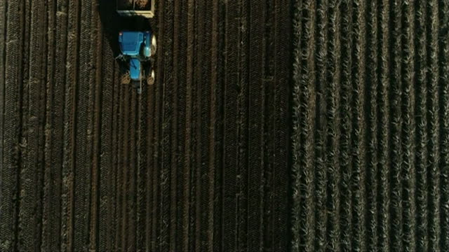 overhead aerial tractor during potato harvest, hull - hull stock videos & royalty-free footage