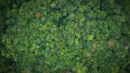 Overhead aerial view of a dense tropical rainforest