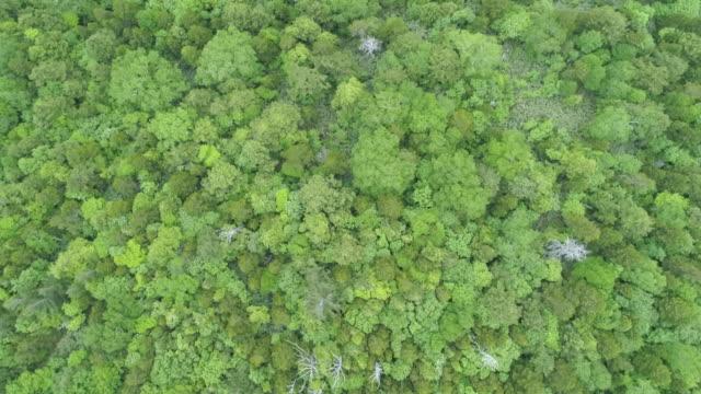 overhead aerial, woodland landscape in towada hachimantai national park - 真俯瞰点の映像素材/bロール