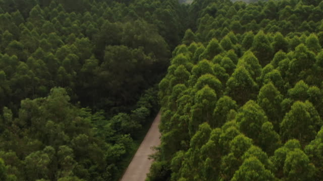overhead drone shot following a roadway on the outskirts of longtan town bobai county guangxi province china - aerial or drone pov or scenics or nature or cityscape stock-videos und b-roll-filmmaterial