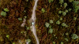 Overhead drone view of a female mountain biker cycling along a forest bike trail