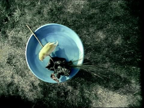 vídeos y material grabado en eventos de stock de overhead medium shot yellow bird in birdbath / bird flying away - baño para pájaros