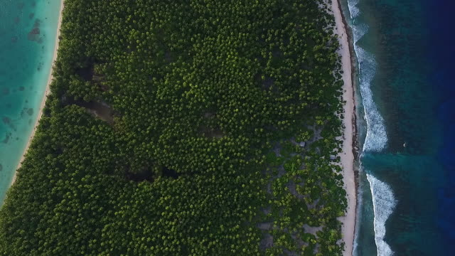 Overhead of Manra atoll, palm trees and beach hut