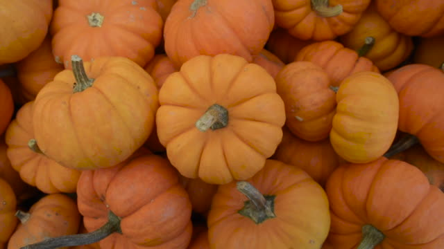 overhead of mini pumpkins - pumpkin stock videos & royalty-free footage