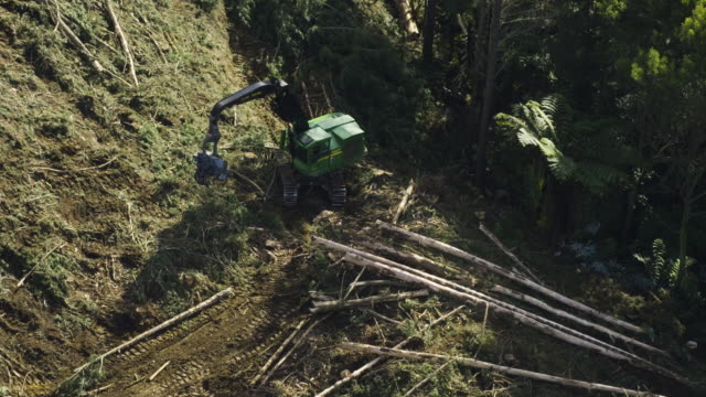 overhead shot of a harvester working at a stump area - industria forestale video stock e b–roll