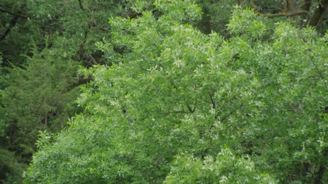 Overhead shot of a tree with branches and green leaves blowing in a forest.