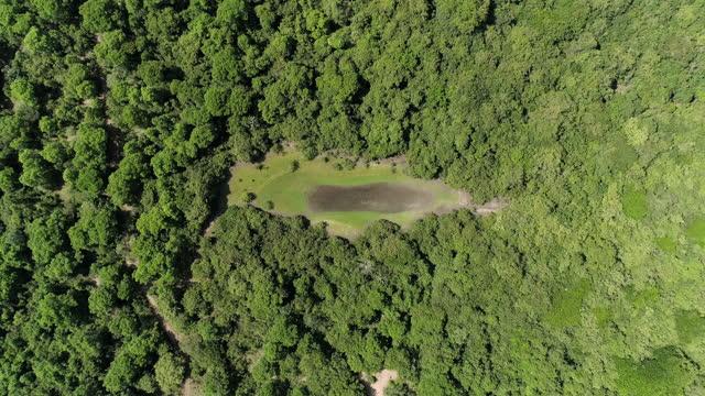 vídeos de stock, filmes e b-roll de overhead shot of a waterhole surrounded by the forest - clima árido