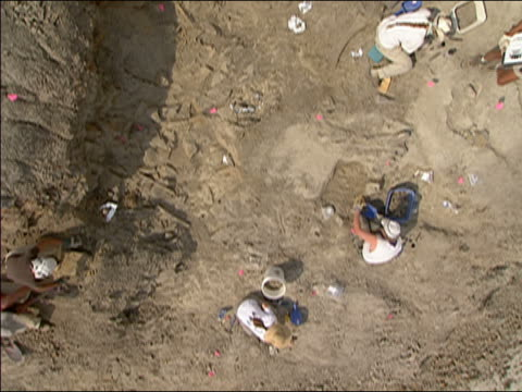 overhead shot of workers digging in fossil bed for t. rex bones / hell creek, montana - 掘る点の映像素材/bロール