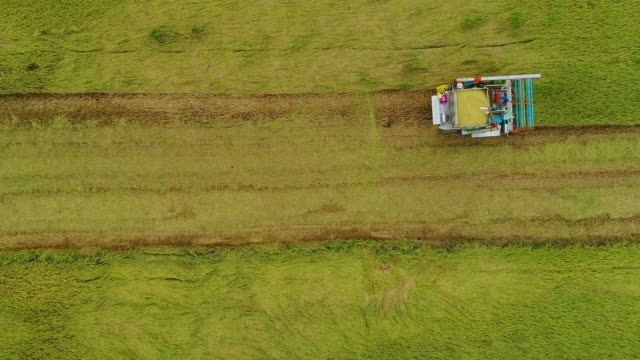 overhead tractor harvesting rice paddy in field on farmland agriculture - rice stock videos & royalty-free footage