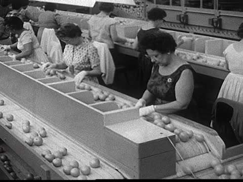 vidéos et rushes de overhead view of a assembly line, women dressed and wearing jewelry, plastic gloves, sorting fruit, mls of a woman, leaning her back on a container,... - chaîne de montagnes