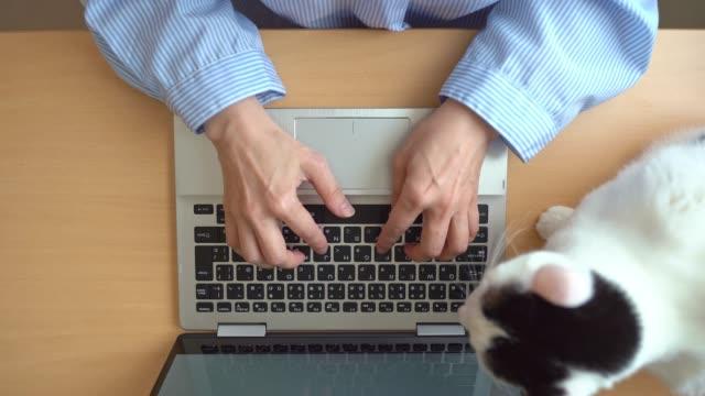 overhead-ansicht der asiatischen frau mit katze mit einem computer - computertastatur stock-videos und b-roll-filmmaterial
