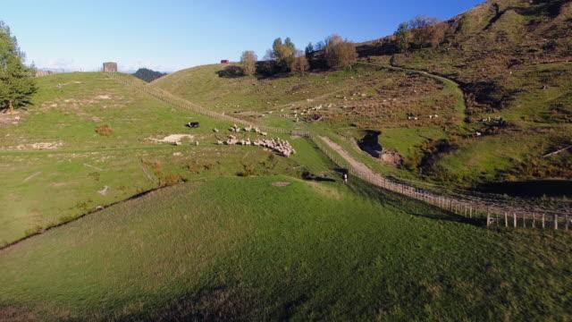 Overhead View Of Sheep Farming.