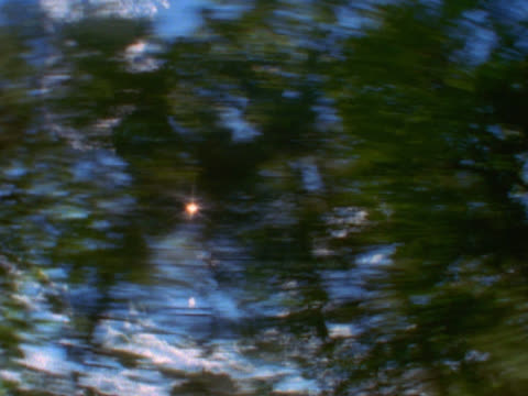 overhead view of sunlight filtering through trees - mpeg video format stock videos & royalty-free footage