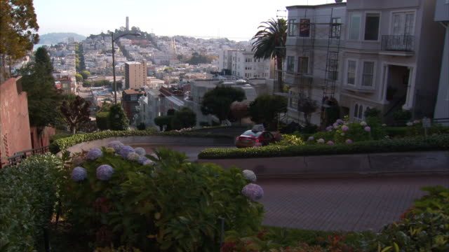 vídeos de stock, filmes e b-roll de overlooking lombard street crooked road vehicles driving down flowers shrubs fg townhouses on right city buildings bg zi tourist attraction - lombard street san francisco