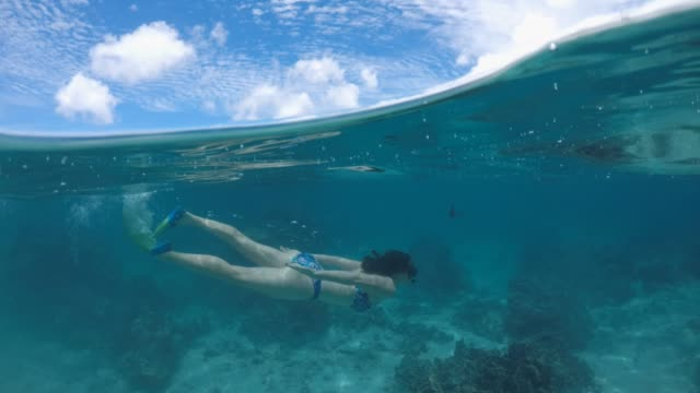 50/50 over/under view of a woman swim underwater in rarotonga lagoon cook islands - rarotonga stock videos & royalty-free footage