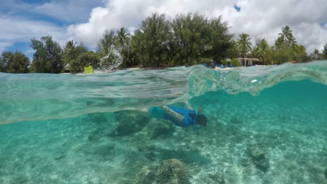50/50 over/under view of a woman swim/snorkeling underwater with coral reef fish in rarotonga cook islands - rarotonga stock videos & royalty-free footage