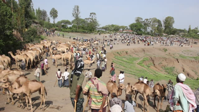 overview of camel fair (fast) - ethiopia stock videos & royalty-free footage