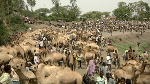 Overview of camel fair