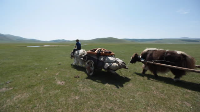 overview of two yak carts moving - animale da lavoro video stock e b–roll