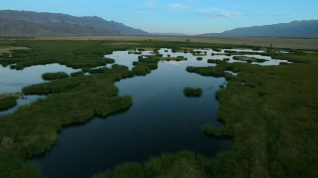 owens valley restored wetland habitat - basin and range province stock videos and b-roll footage