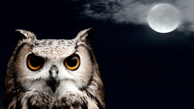 owl at night with moon and clouds - blinking stock videos & royalty-free footage