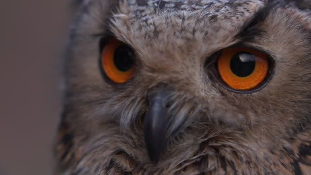 owl close up - animal eye stock videos & royalty-free footage