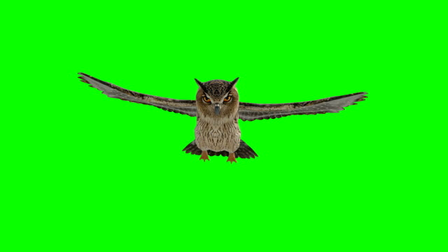 owl gliding green screen (loopable) - tail wing stock videos and b-roll footage