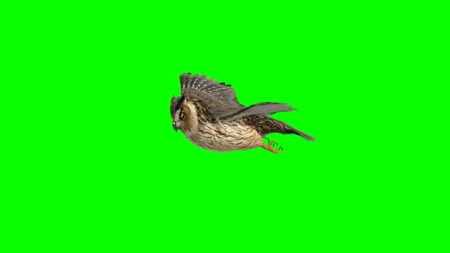 owl gliding green screen (loopable) - inquadratura matte video stock e b–roll