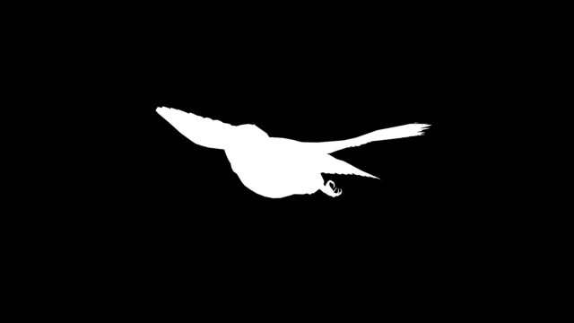 フクロウ (単発) のシルエットを滑空 - 輪郭点の映像素材/bロール