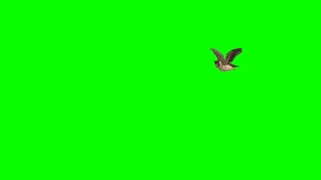 owl landing green screen (loopable) - landing touching down stock videos & royalty-free footage