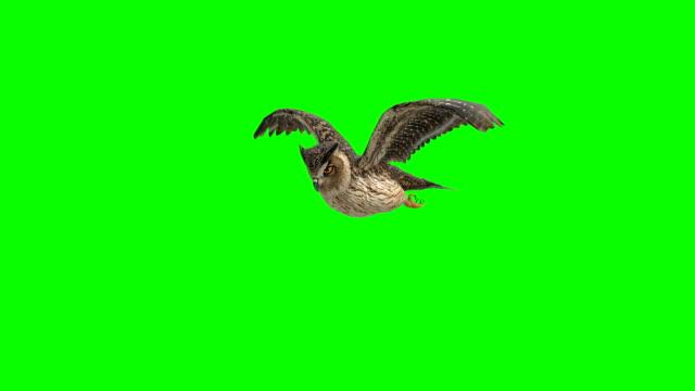 vídeos y material grabado en eventos de stock de buho de aterrizaje pantalla verde (loopable) - fondos simples