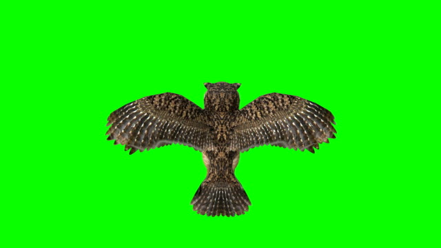 owl landing green screen (loopable) - green matte stock videos & royalty-free footage