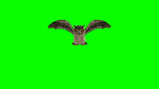 owl landing green screen (loopable) - owl stock videos & royalty-free footage