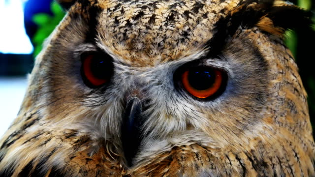 owl looking close-up 4k - one animal stock videos & royalty-free footage