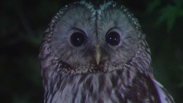 stockvideo's en b-roll-footage met owl perching on a tree branch - bruin