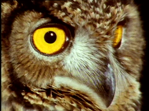 owl spins head, reveals yellow eyes to camera - animal eye stock videos & royalty-free footage