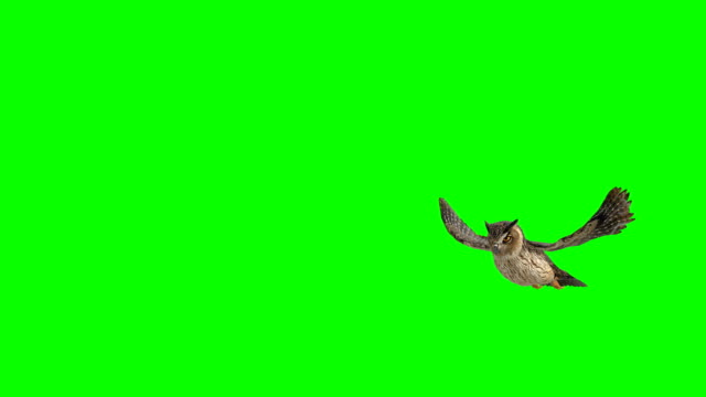 owl takeoff screen (loopable) - green matte stock videos & royalty-free footage